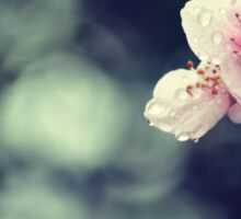 Flower Plum Blossoms photography Sticker