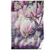 Cherry blossoms Flower Nature Photography Poster