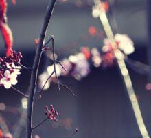 Flower Plum Blossom photography Sticker