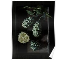 African Horned Melon Poster