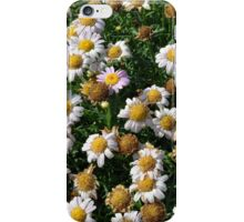White flowers and yellow center, natural background. iPhone Case/Skin