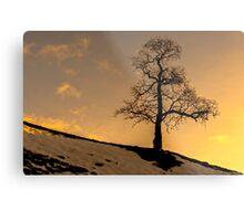 Alston - Lone Tree Sunset Metal Print