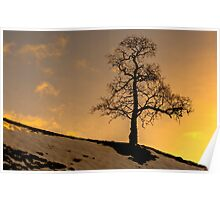 Alston - Lone Tree Sunset Poster
