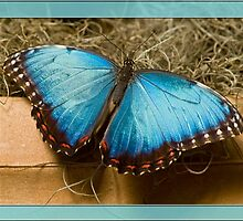 Beautiful Blue by Gaby Swanson