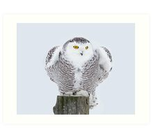 Perch - Snowy Owl Art Print