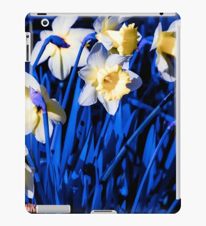 Blue Daffodils. iPad Case/Skin