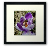 The bee is arrived much too early Framed Print