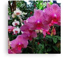 Pink Orchid #1 Canvas Print
