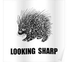 Sharp Porcupine Poster