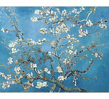 Vincent van Gogh - Branches with Almond Blossom Photographic Print