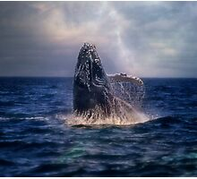 Humpback Rising  Photographic Print