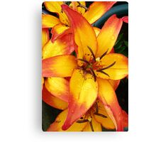 Fire lily Canvas Print