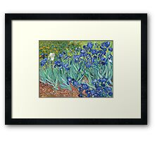 Vincent van Gogh - Irises Framed Print