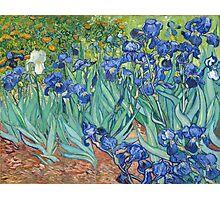 Vincent van Gogh - Irises Photographic Print