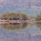Loch Maree islands by Christopher Cullen