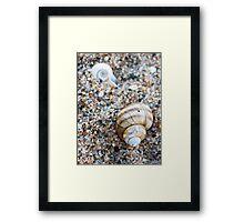 Little Shell, Big Shell Framed Print