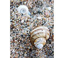 Little Shell, Big Shell Photographic Print