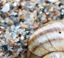 Little Shell, Big Shell Sticker