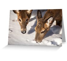 Two Searching Greeting Card