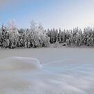 Swedish winter by Mark Williams