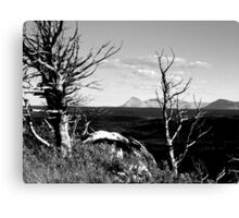 Bristle Cone Pines in Black & White Canvas Print