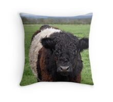 Belted Galloway Throw Pillow