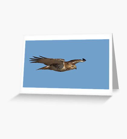 Glider - Red-tailed hawk Greeting Card