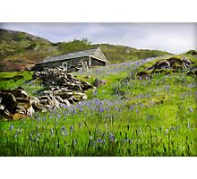 Blanketed Hill Photographic Print