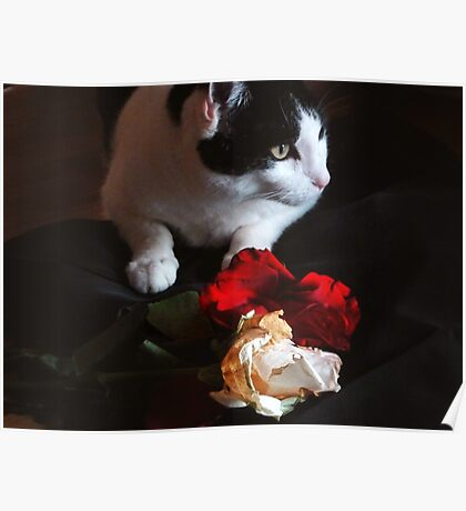 Cat with Roses Poster