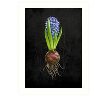 Blue Hyacinth Hydroponics (Tryptic 1/3) Art Print