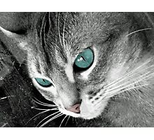 Baby's Got Blue Eyes Photographic Print