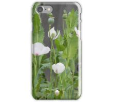 Poppy Plants iPhone Case/Skin
