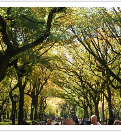 Central Park Fall Colors, New York City,  Sticker