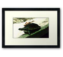 Turtle Time Framed Print
