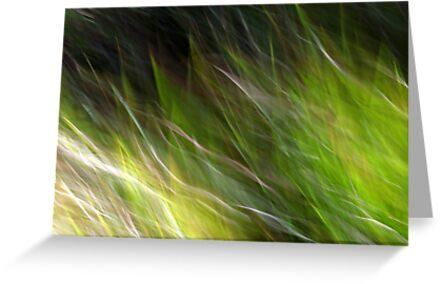 Watching the Wind Blow #2 by Kitsmumma