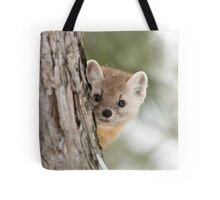 Pine Marten - Algonquin Park Tote Bag