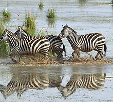 Zebras Crossing by Carole-Anne