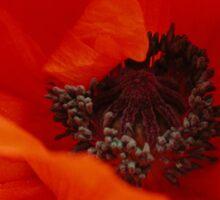Poppies Bloom Sticker
