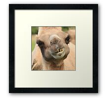 Camel Teeth and a Little Lunch Framed Print