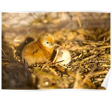 Just Hatched... Poster