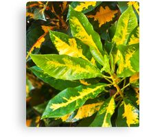 Nature in Colour Canvas Print