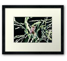 Restful Bee Framed Print