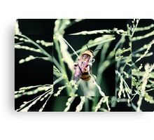 Restful Bee Canvas Print