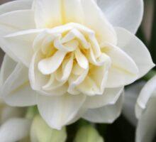 Triple Bloom Sticker