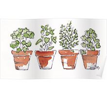 Herbs in pots Poster