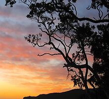Great Barrier Island Sunset - New Zealand by Nicola Barnard