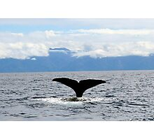 Sperm Whale Tail Photographic Print