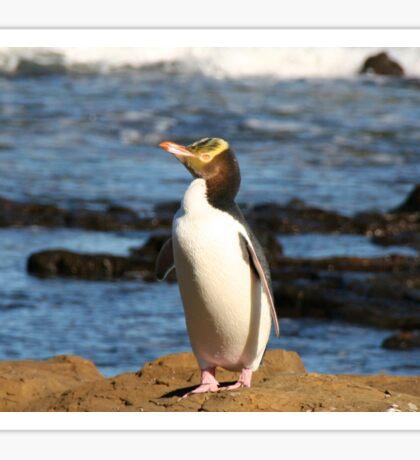Yellow-eyed Penguin Sticker