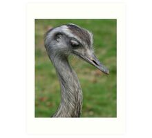 Friendly Rhea at Pen-y-Ffrith Bird Gardens, North Wales Art Print