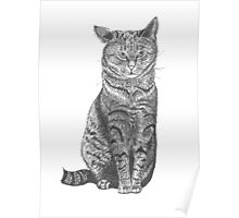 Cat droopy ear, graphic Poster